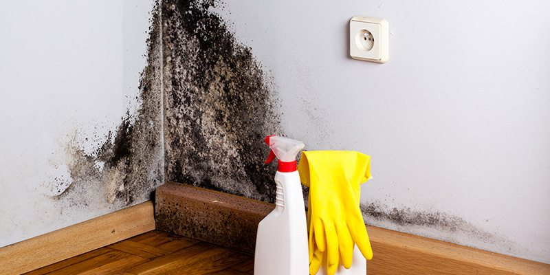 Mold Removal in Winston-Salem, North Carolina