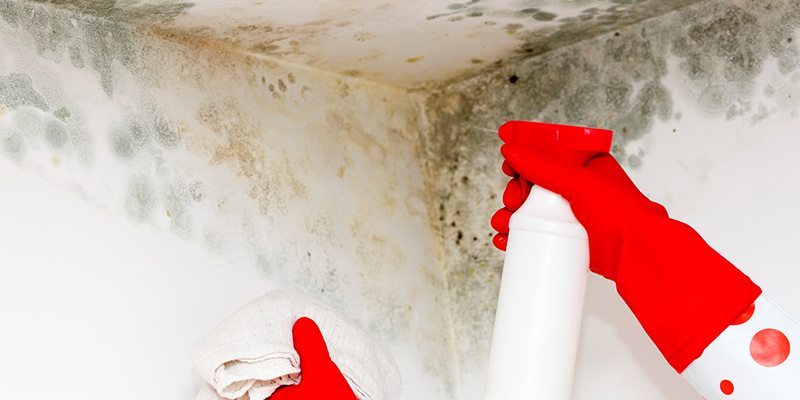 Mold Assessment in Winston-Salem, North Carolina