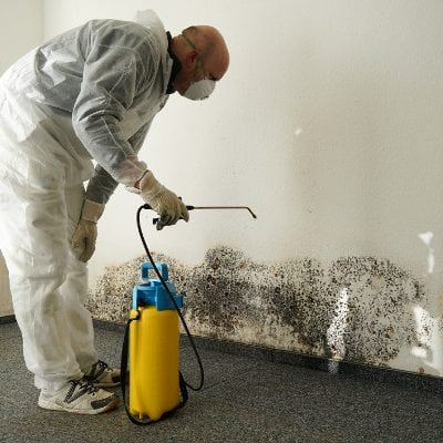 Principles of Mold Removal